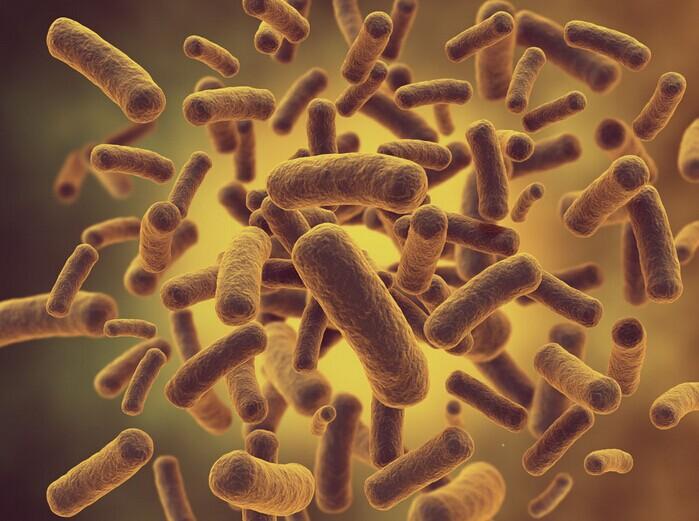 涉及微生物的专利技术交底书的撰写内容